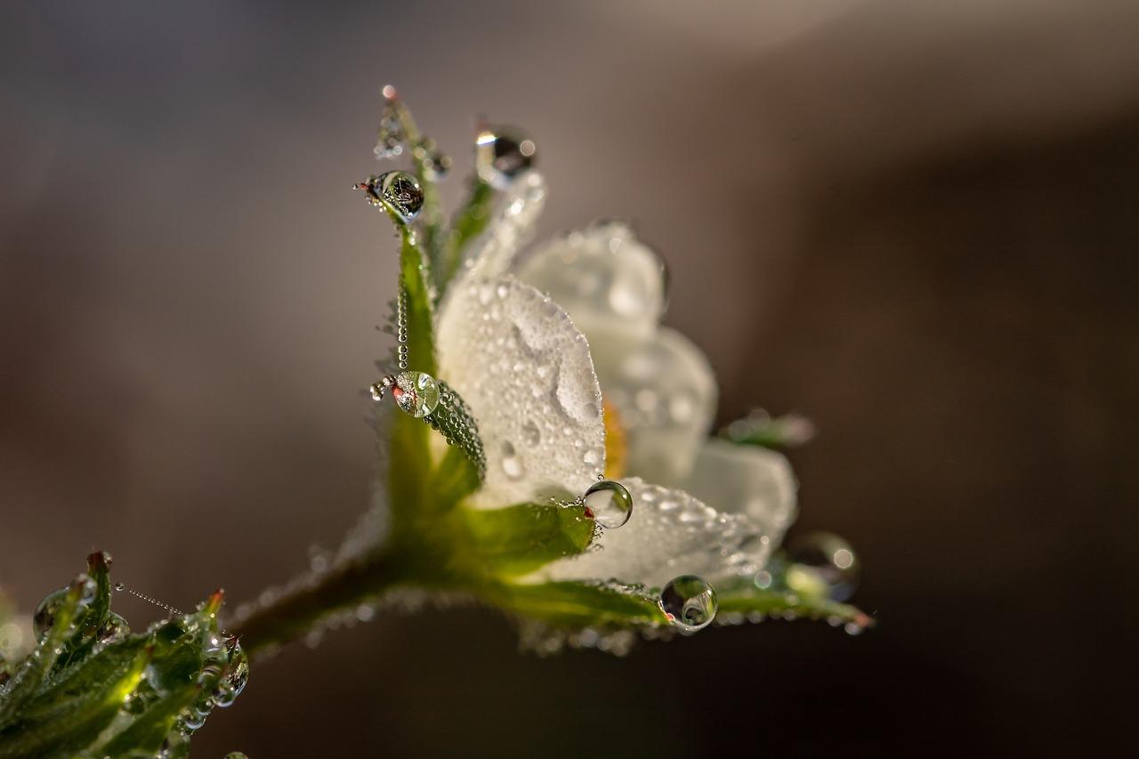 raindrop-3402550_1280